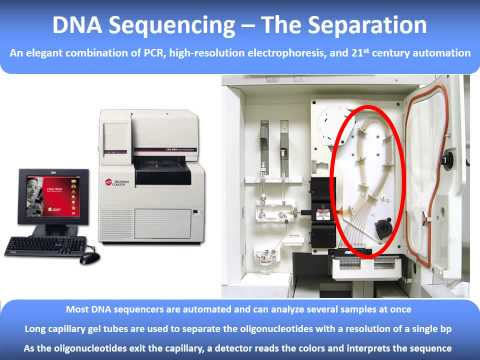 L10   DNA Isolation and Sequencing