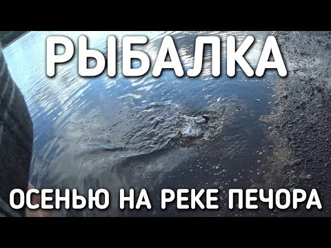 ОСЕННЯЯ РЫБАЛКА НА РЕКЕ ПЕЧОРА / БРАТЬЯ ПРИХОДЬКО / СЕНТЯБРЬ 2017