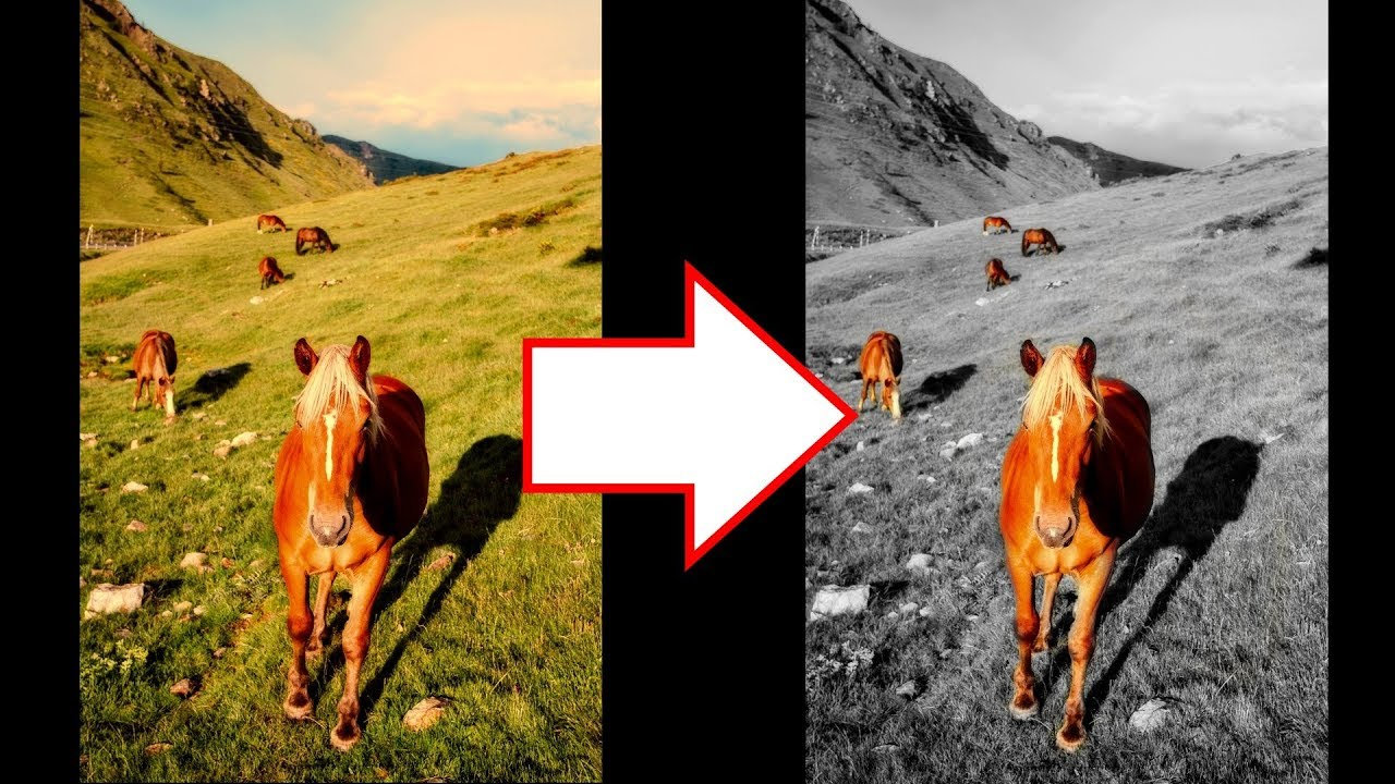 How to change background to black and white in android iphone snapseed tutorial