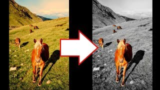 How to Change Background to Black and White in Android / iPhone [Snapseed Tutorial]
