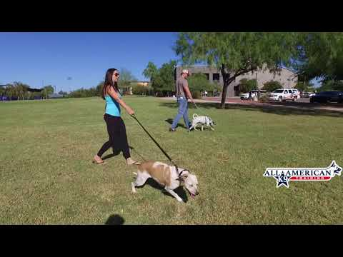 Dog Training Yuma Az