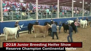 2018 Junior Breeding Heifer Show- Day 1 thumbnail
