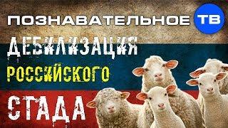 Дебилизация и уничтожение российского стада (Познавательное ТВ, Владимир Базарный)