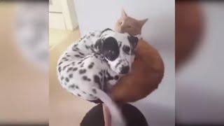 Смешные видео про животных.  Приколы с кошками