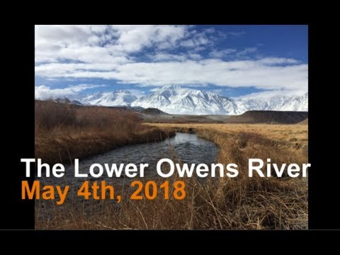 Lower Owens River Fly Fishing May 2018