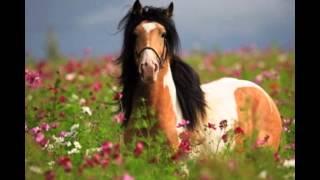 Самые красивые лошади в мире!!!