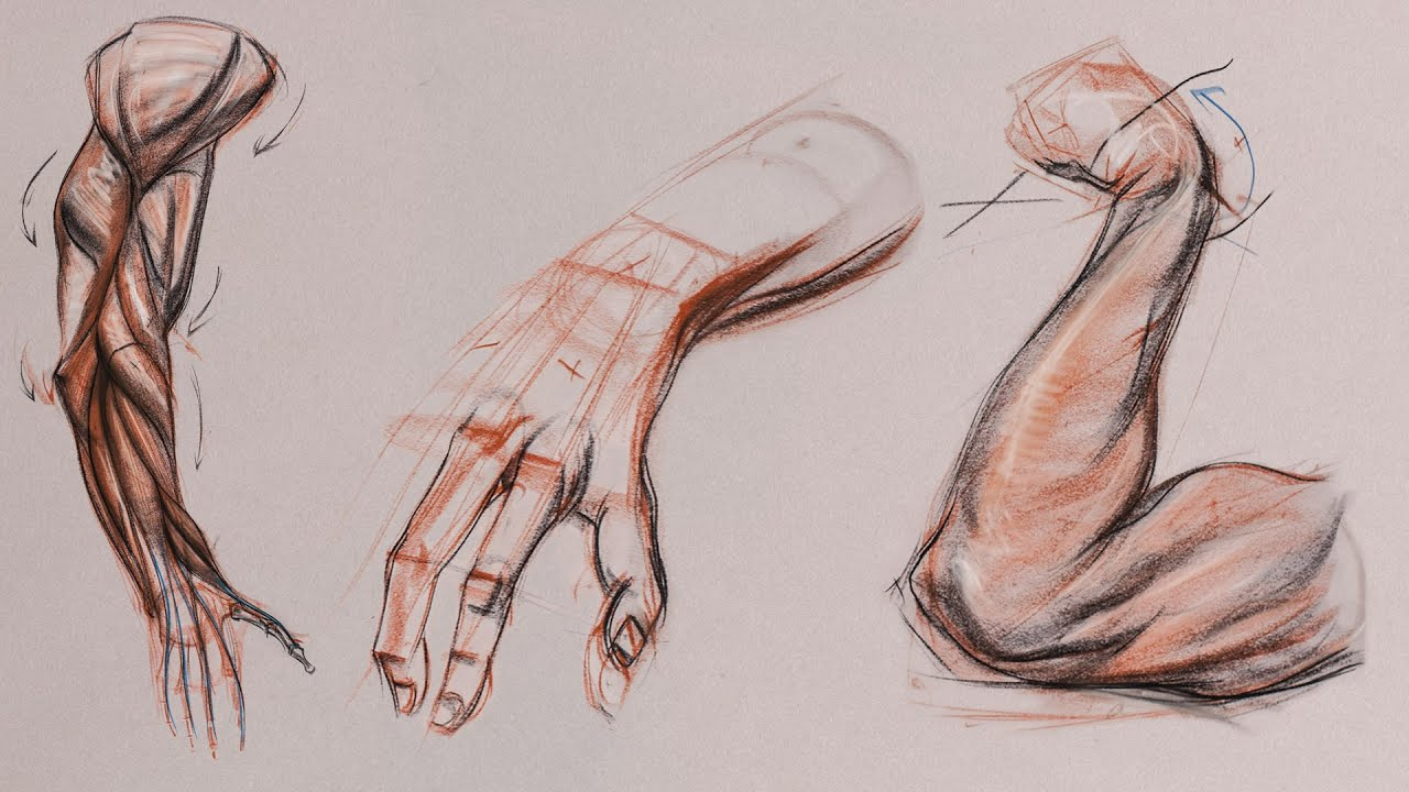 Anatomy Workshop Volume Six: Structure and Anatomy of the Arm with ...