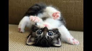 Funny baby animals video on Cute Pets