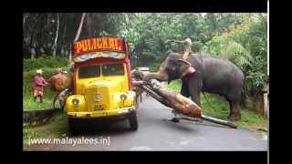 Elephant loading heavy timber to truck (Lorry) in Kerala