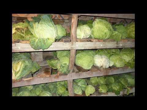 Как хранить цветную капусту в погребе