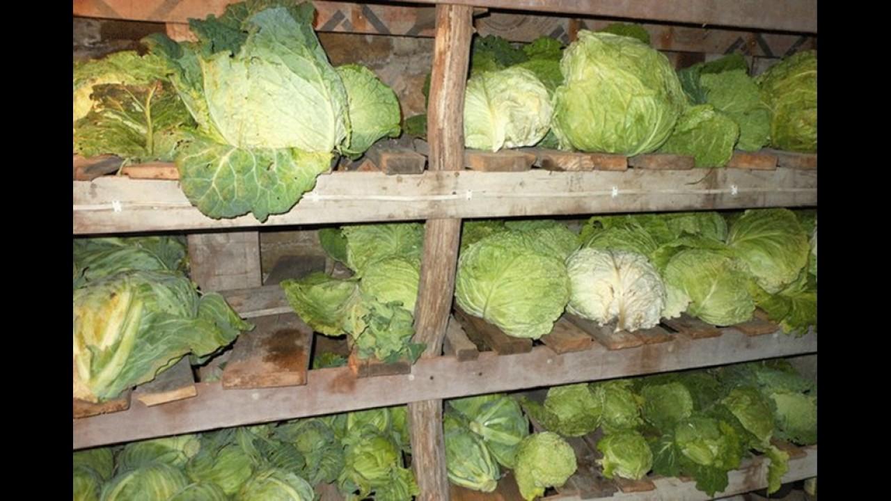 хранения цветной капусты