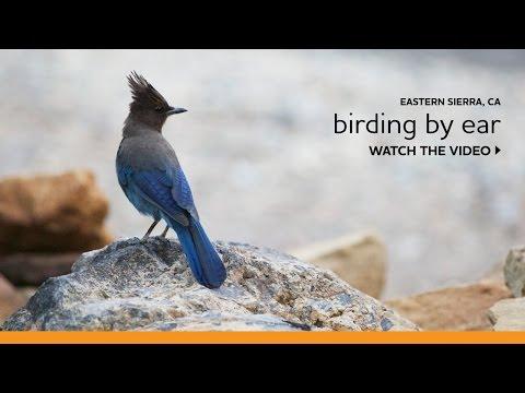 Birding By Ear In The Eastern Sierra