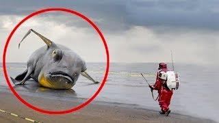 Die 8 Komischsten Funde nach einem Tsunami