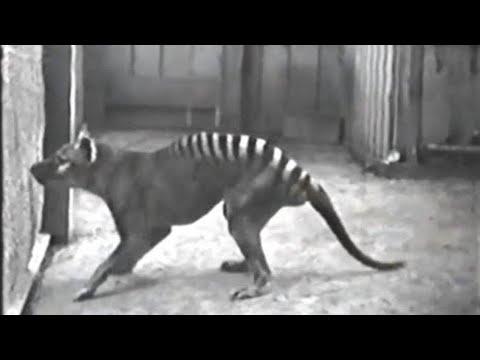 10 Rare Videos