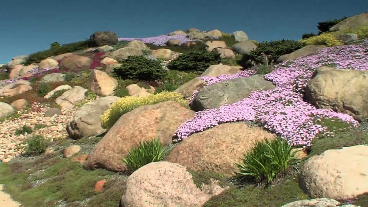 FINDLINGSPARK Nochten Teil 2 Der Steingarten  botanische