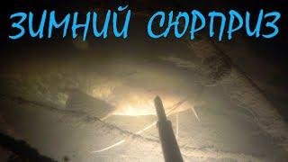 Подводная охота Зимний сюрприз