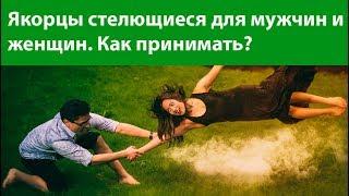 Якорцы стелющиеся для мужчин и женщин. Как принимать?  Повышение уровня тестостерона