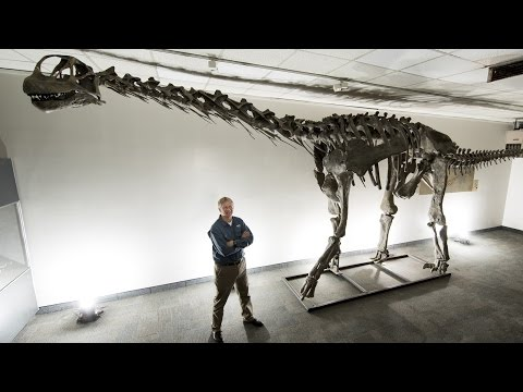 Meet Moabosaurus: Utah's newest dinosaur identified by BYU geologists