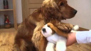 Dog Trick-cuddling A Toy