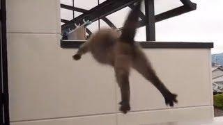 Эпический прыжок кота / Epic cat jump