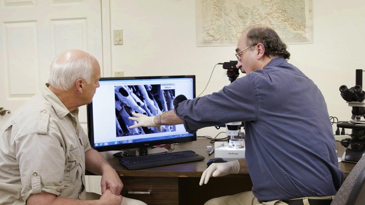 Tissue fossils hardens soft the evidence in dinosaur Dinosaur Shocker
