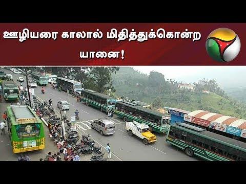 !   #Nilgiri #Elephant