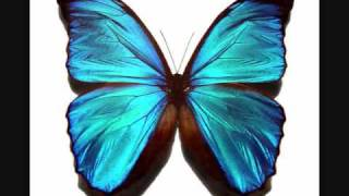 Repeat youtube video DDR Butterfly [FULL] with lyrics