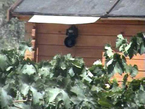 Sin aves como se ahuyentan los pajaros en los estados for Ahuyentar palomas del balcon