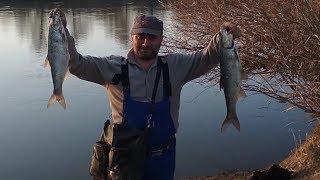 Рыбалка на жереха, рыбалка на леща, река Каратал 04.04.19.