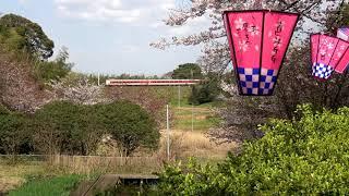 【鉄道のある風景】出雲平野に舞う平成最後の花吹雪 (8-Apr-2019)