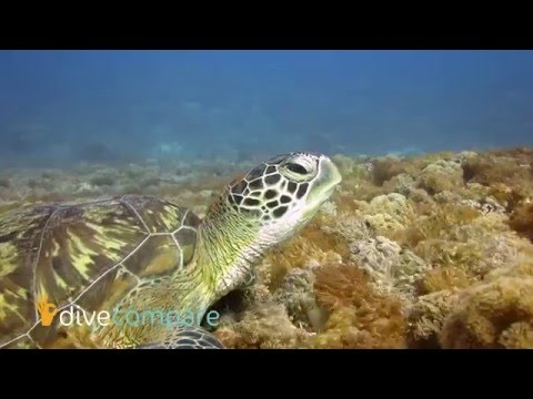 Scuba Diving Komodo, Indonesia | Dive Compare