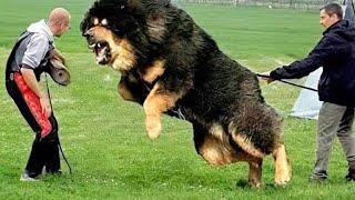 Los 10 Perros Más Poderosos Del Mundo