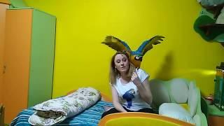 Последствия для дома: содержание большого попугая 5 серия