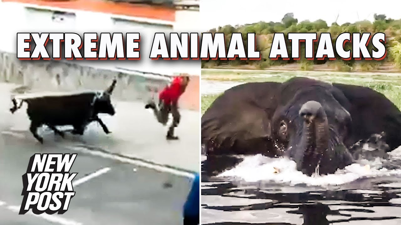 The Most Extreme Animal Attacks of 2018 | New York Post