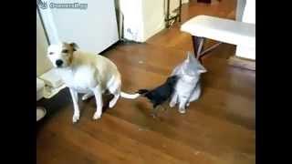 Ворона кормит собаку и кошку [Crow feeding a dog and a cat]