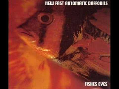 New Fast Automatic Daffodils - Fishes Eyes