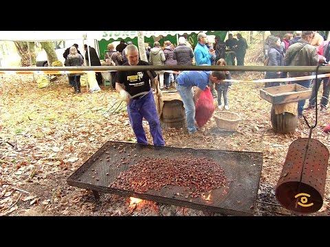 Noticia de Lugo: XXIX Festa da Castaña do Courel