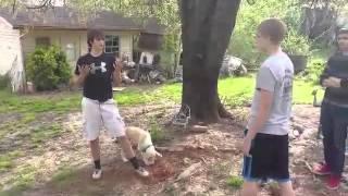 Video Backyard fighting- Andrew vs Dakota download MP3, 3GP, MP4, WEBM, AVI, FLV Juli 2018