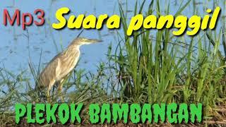 Download Mp3 Suara Panggil Burung Blekok
