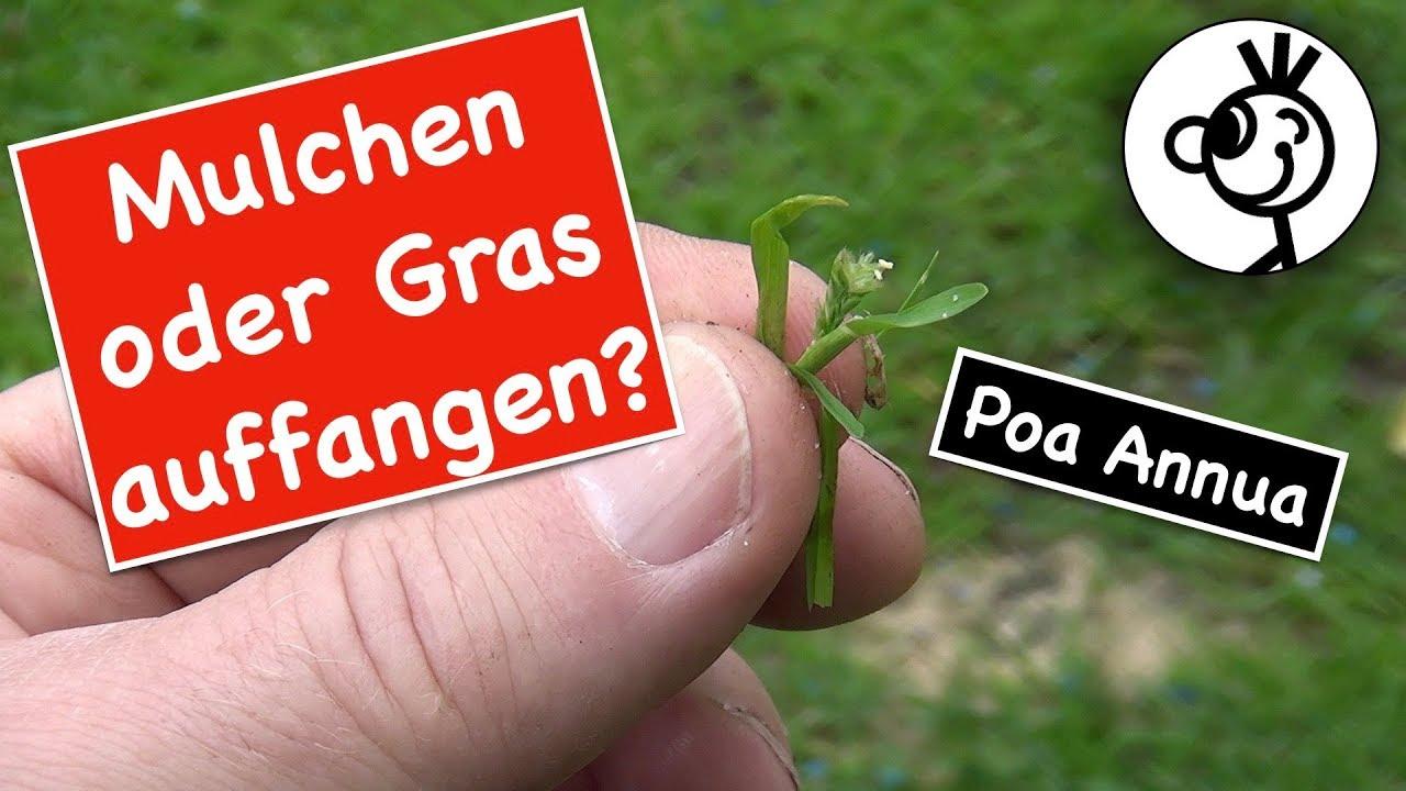 Poa Annua Im Rasen Mulchen Oder Gras Auffangen Youtube