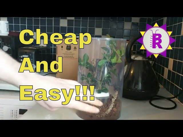CHEAP & EASY ways to set up an enclosure for Phasmids (Stick insects)