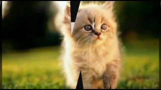 Картинки милых котят и щенков!