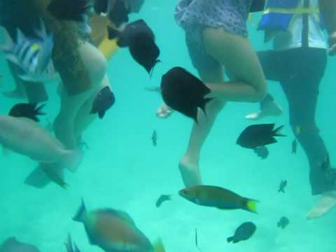 Roilo Golez, fish sanctuary, Looc, Romblon, 11 June 2010 (13)