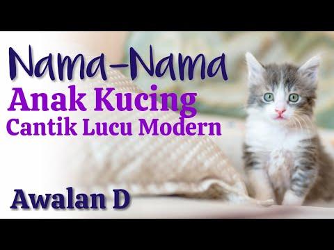 Nama Yg Bagus Buat Kucing 81021 Nama Untuk Kucing Comel Lucu Dan Unik