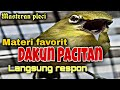Materi Favorit Dakun Pacitan Langsung Respon  Mp3 - Mp4 Download