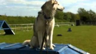 Garrett Dog Training