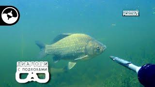 Подводная охота – не браконьерство! | Диалоги с подвохами
