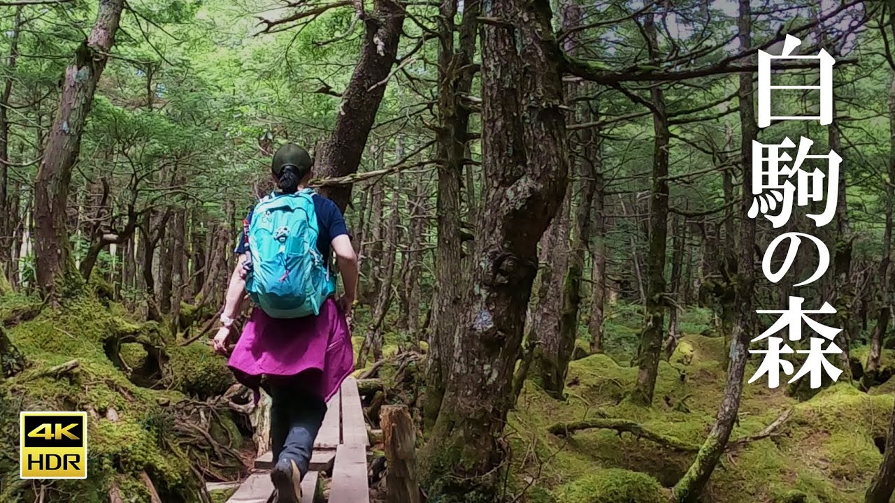 4K映像【北八ヶ岳】白駒池から高見石 にゅうを巡る2021