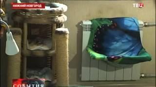 Судебные приставы описали кошек вместе с имуществом пенсионерки