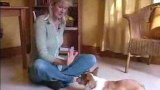 How To Train Puppies : Teach Your Puppy To Stay